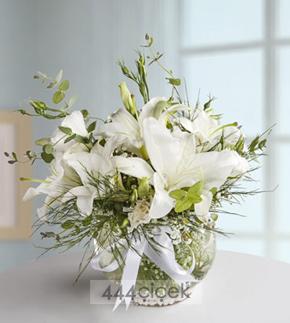Tombul Beyaz - Lilyum