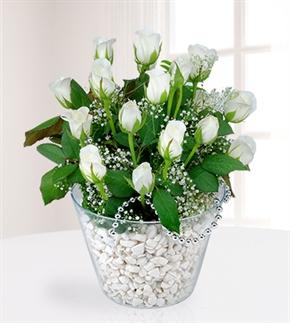 İhtişamlı Aşk Beyaz Güller